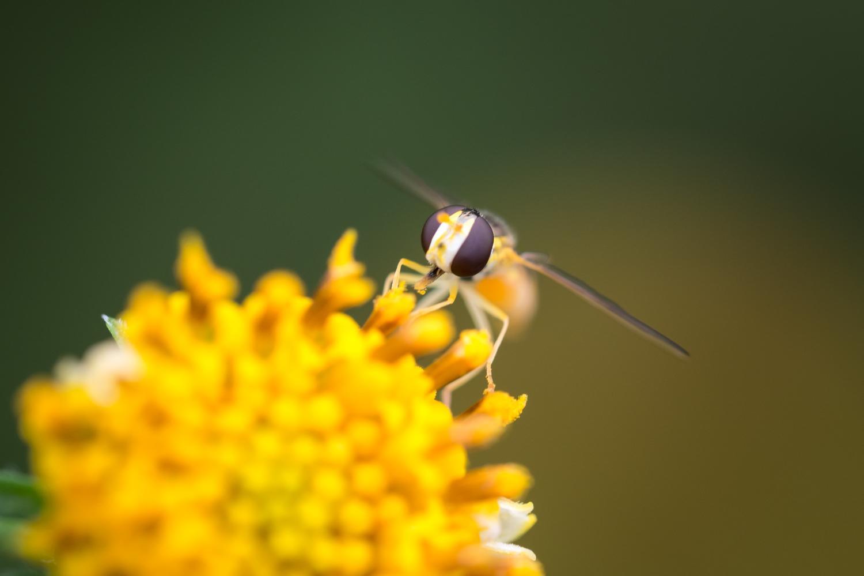 花粉が凄くつらい、今日の成果はなんだかしょぼい