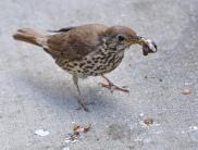 jinn-in-a-bottle-bird