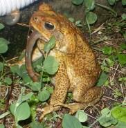 jinn-in-a-bottle-frog