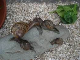 jinn-in-a-bottle-snails-taking-shelter