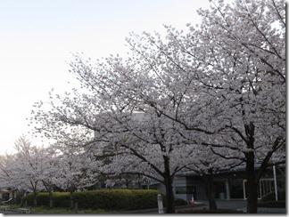 JT-sakuranotoorinuke-2018-0328 (2)