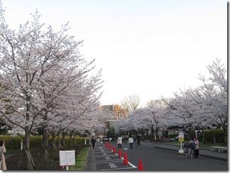 JT-sakuranotoorinuke-2018-0328 (3)