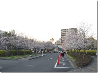JT-sakuranotoorinuke-2018 (10)