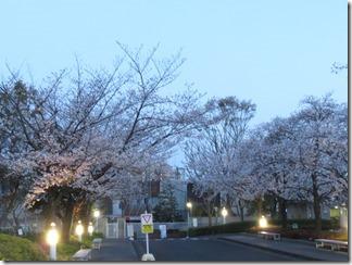 JT-sakuranotoorinuke-2019-04-04 (6)