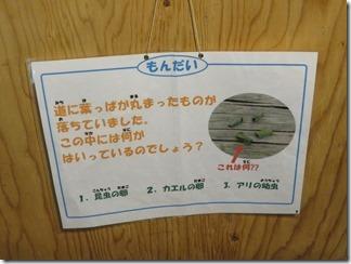 chihaya-hositosizannomyu-jiamu (10)