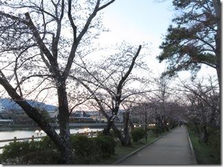 nagaokatenmanguu-sakura-raitoappu (13)