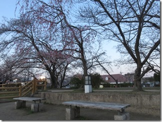 nagaokatenmanguu-sakura-raitoappu (20)