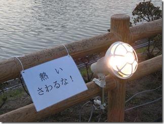 nagaokatenmanguu-sakura-raitoappu (5)