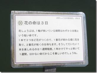 oosakafueiyamadaikekouen (51)
