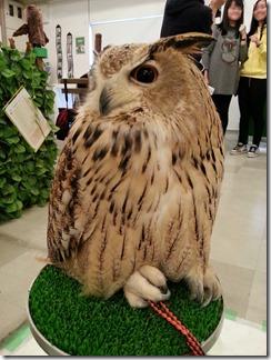 owl-cafe (29)