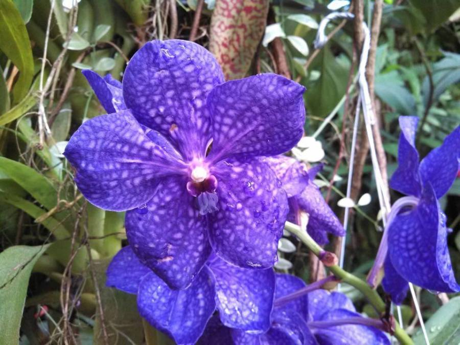 Memorial Day Weekend: Siesta Key & Selby Botanical Gardens