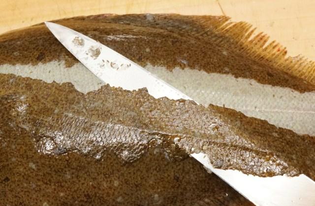 ヒラメはウロコを包丁で梳き引きする