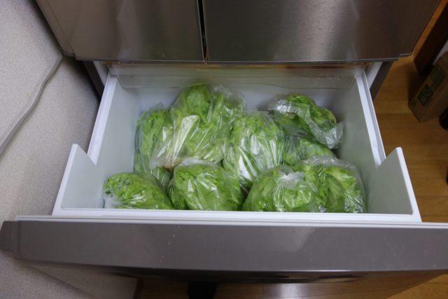 自宅の水耕栽培で冷蔵庫がいっぱいになります。