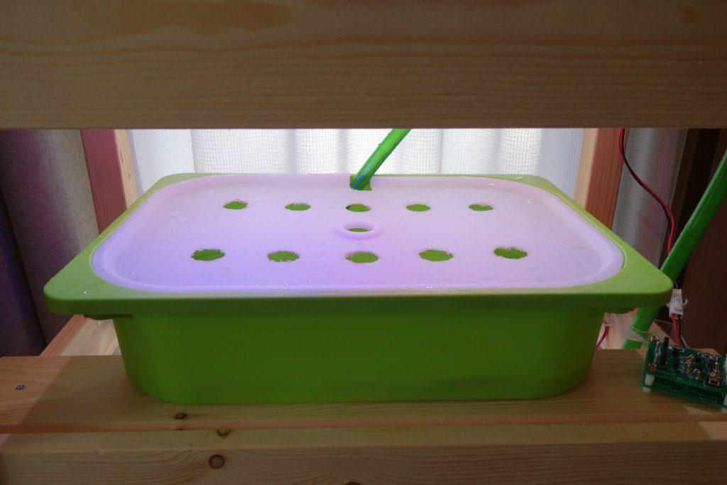自作の水耕栽培におすすめの容器
