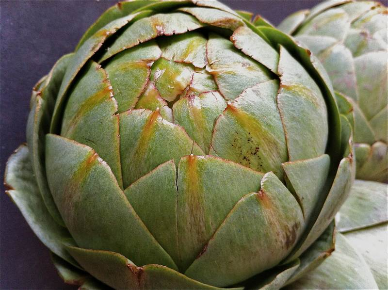 Artichoke and Celeriac – Beautiful Tasting
