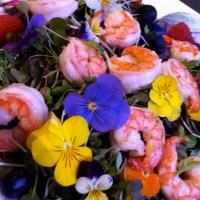Microgreens and Shrimp? Salmon? Sardines? - You decide!