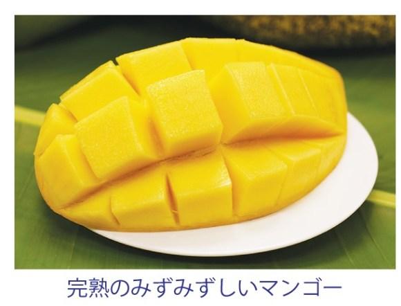 「バン週マンゴー」でみずみずしいマンゴーを日本へ!