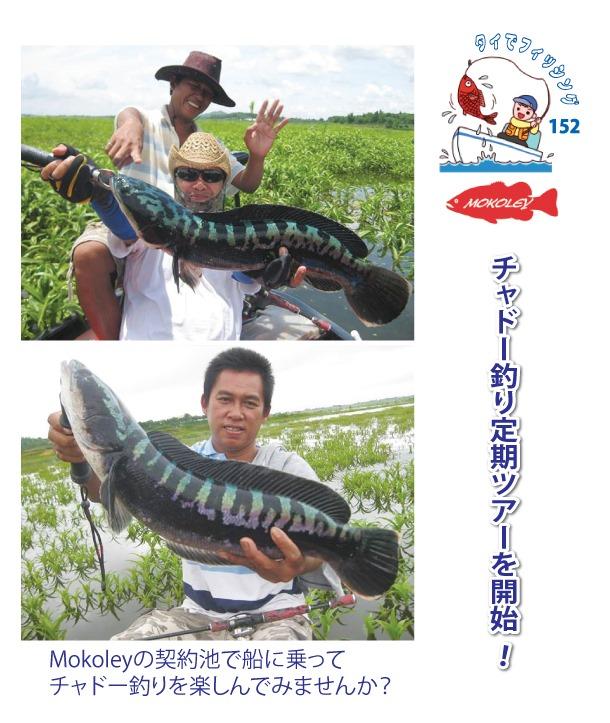 チャドー釣り定期ツアーを開始「Mokoley(モコリー)」