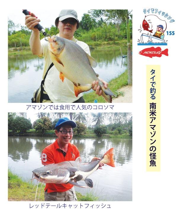 「Mokoley(モコリー)」でタイで釣る南米アマゾンの怪魚