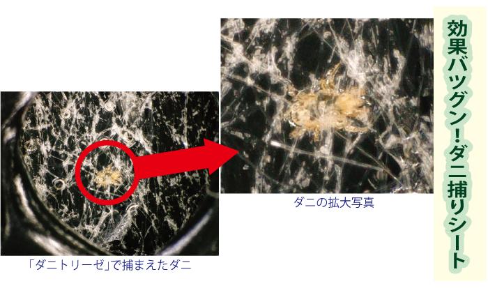 効果バツグン!日本製ダニ捕りシート「ダニトリーゼ」