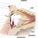 眼球破裂 治る 失明 術後視力 後遺症 画像 中国 サッカー 吉永小百合 俳優