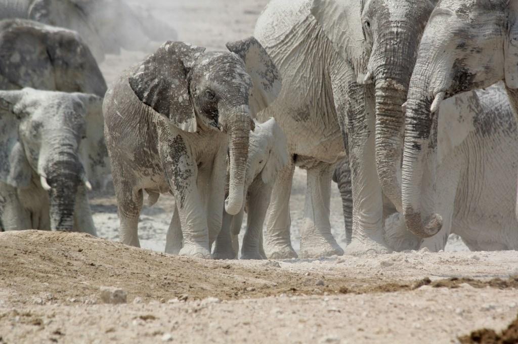 Namibia und Botswana 2012