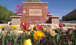 Spring tulips flowering at Hawthorne 2 Entrance