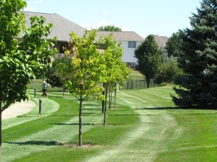 Our crews carry out the tasks of weekly mowing.