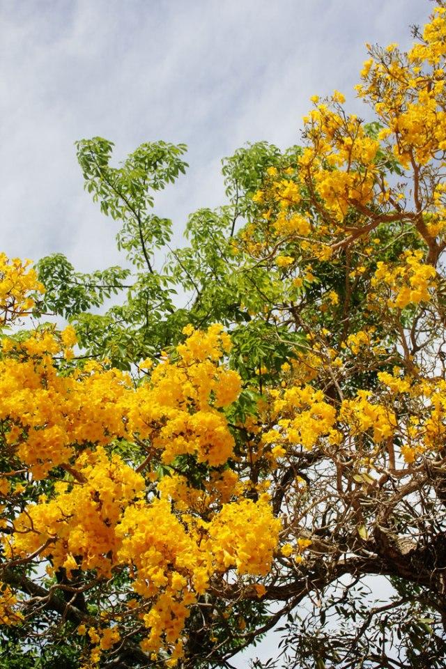 naples-botanical-garden-13
