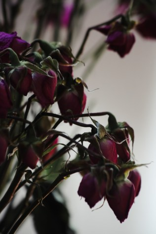 dried-roses-3
