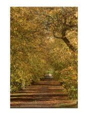 * IMG_1528 Autumn 11