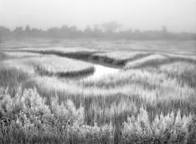 Foggy Marsh — Cape May County, NJ © jj raia