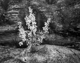 Young Cottonwood —Zion National Park, UT © jj raia