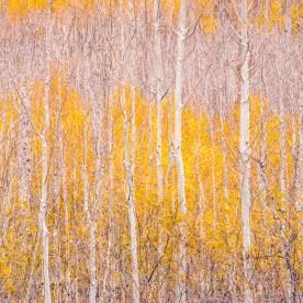 Aspen Grove - North Rim, Grand Canyon, AZ © jj raia