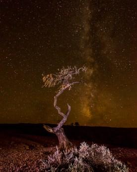Milky Way and Snag - Capitol Reef NP, UT © jj raia