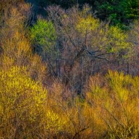 Spring Buds in Early Light —Jordan Lake © jj raia