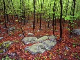 Rain Soaked Forest —High Point State Park, NJ © jj raia