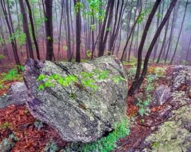 Forest in Fog — Ramapo State Forest, NJ © jj raia