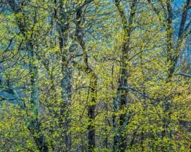Spring Hillside No.4 - Blue Ridge Parkway, NC © jjraia
