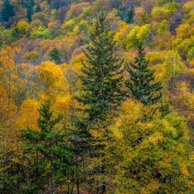Fir Family —Smoky Mountain National Park, NC © jj raia