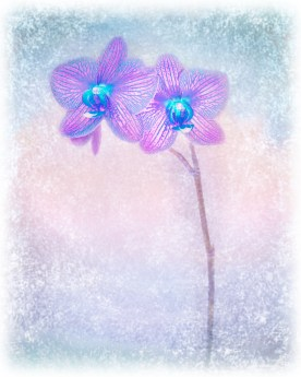 Orchid Variation Feathered Edge No. 2 © jj raia
