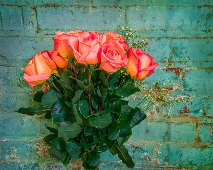 Roses and Painted Wall — © jj raia