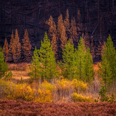 Edge of the Burn — Grand Teton NP © jj raia