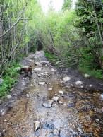 Stream or trail?