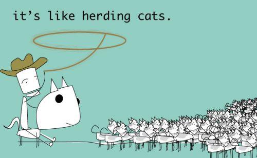 herding cats quote