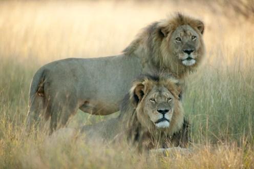 Cecil & Jericho / Photo: Brent Stapelkamp