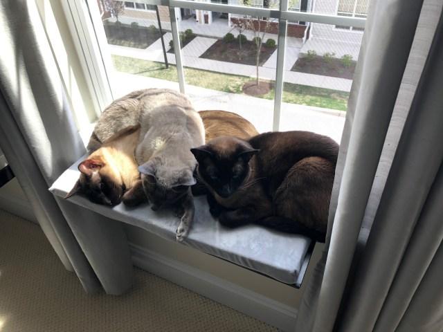 cat windowseat