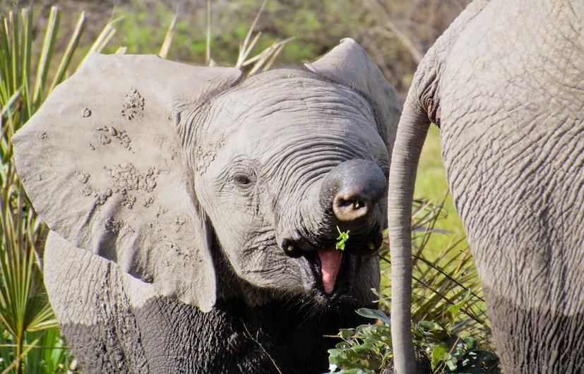 JLM Travel - Delta de l'okavango face aux Big Fives