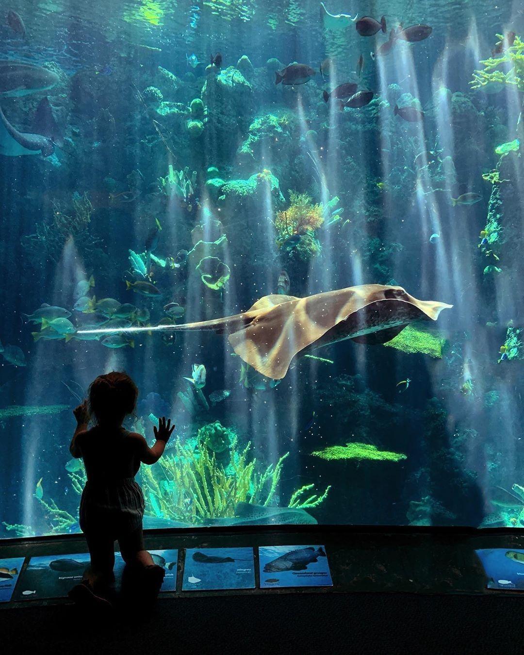 JLM Travel Kids aux USA - Los Angeles