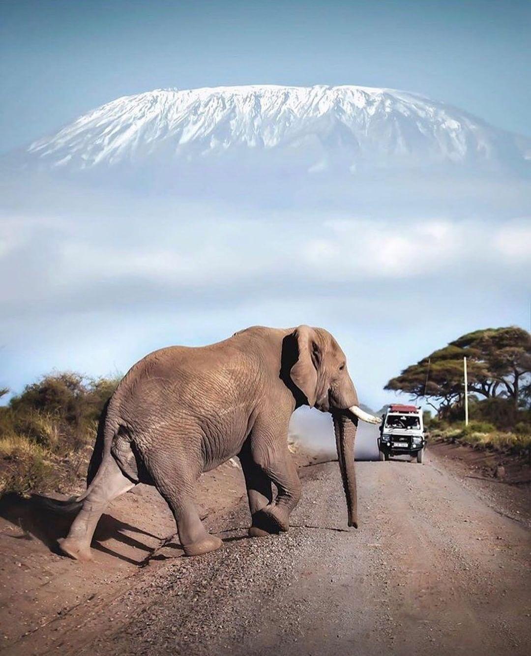 JLM Travel - Nos conseils pour un safari réussi